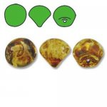 Czech Glass Mushroom Beads 9x8mm (30) Crystal Picasso